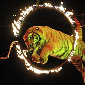 Цирки Кичменгского Городка