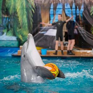 Дельфинарии, океанариумы Кичменгского Городка