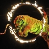 Цирки в Кичменгском Городке