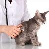 Ветеринарные клиники в Кичменгском Городке